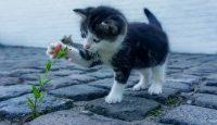 cauze diabet pisica